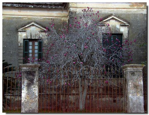 La casa de las magnolias.