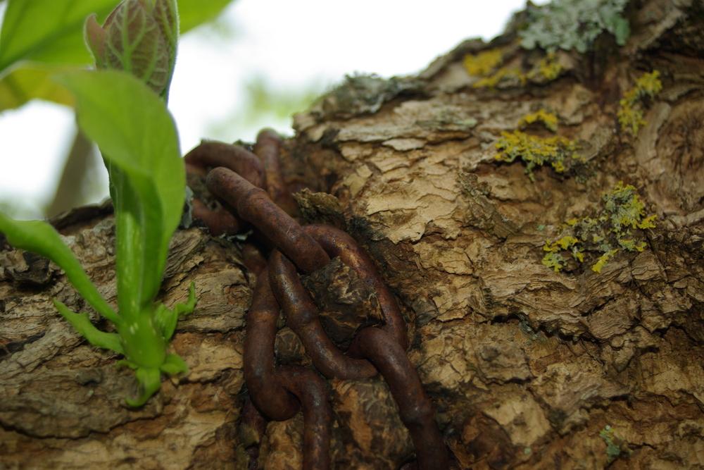 la chaîne prisonnière de l'arbre