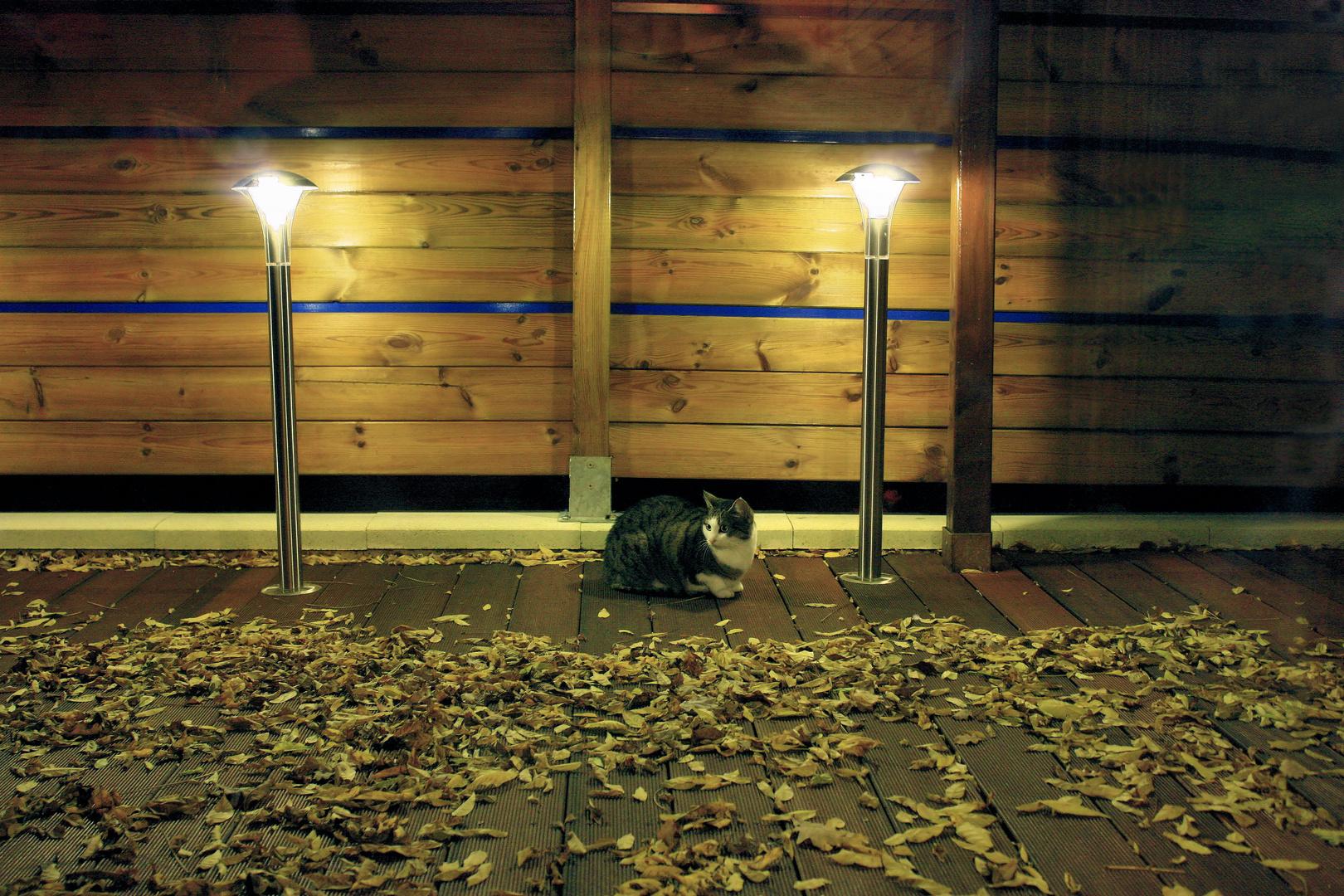 La chatte, les feuilles et la terrasse