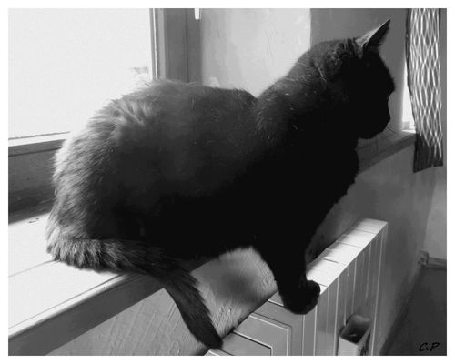 La chatte sur un radiateur brulant !
