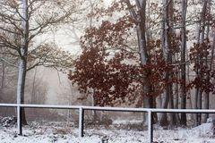 La chênaie en hiver