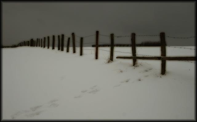 la cloture sous la neige