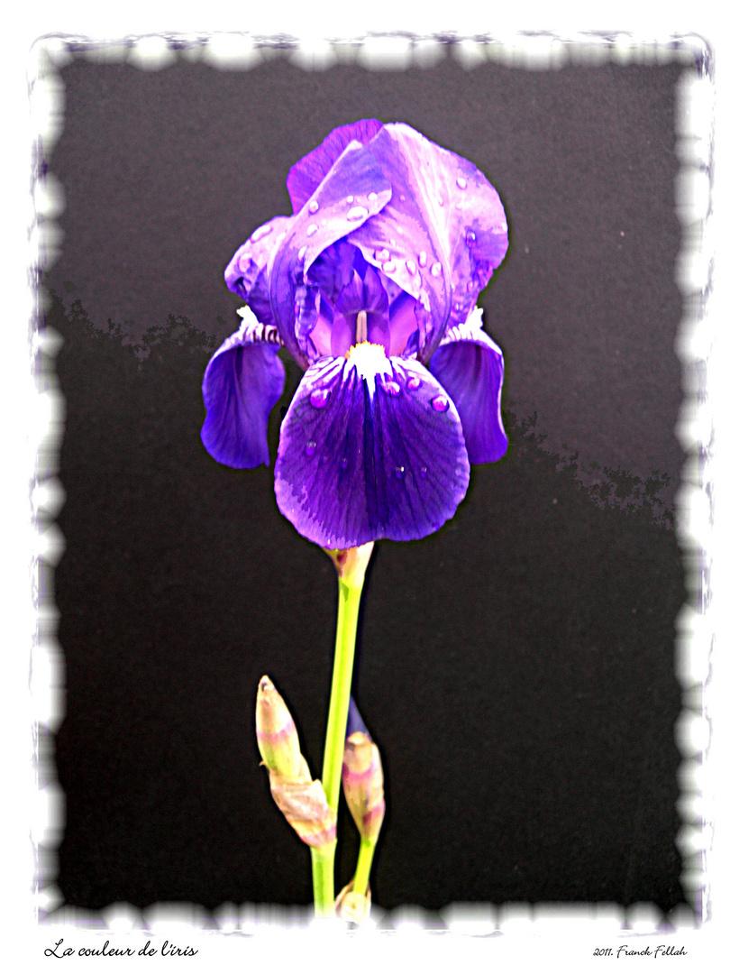 La couleur de l'iris.