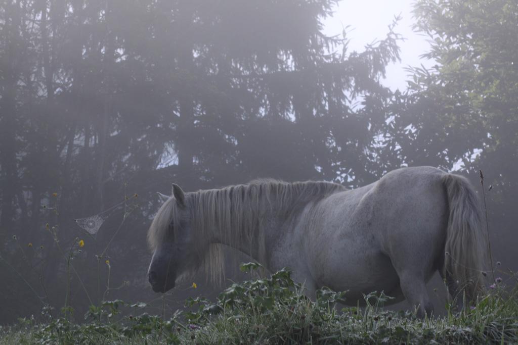 La crinière en brume