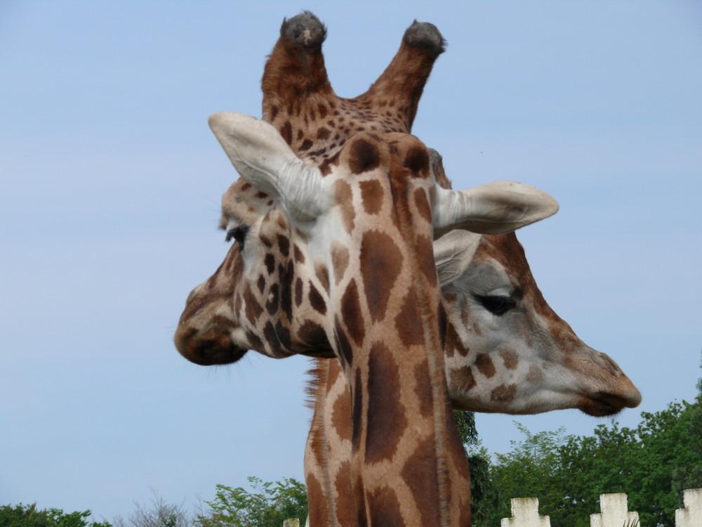 La croisée des girages.