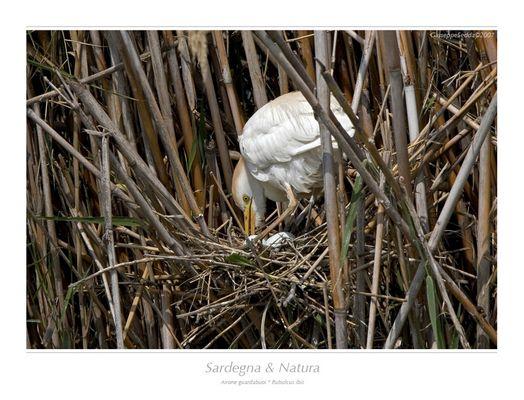 ... la cura del nido ...