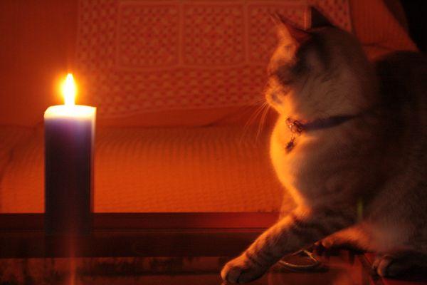 """La curisidad """"quemo"""" al gato"""