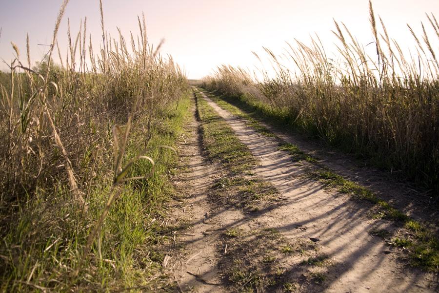 ...la curva oltre il sentiero...