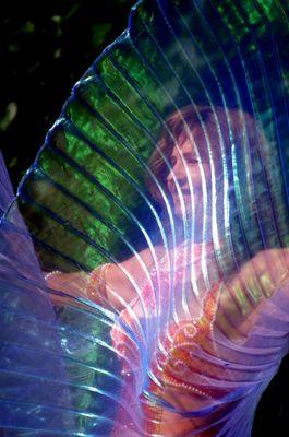 la dame papillon