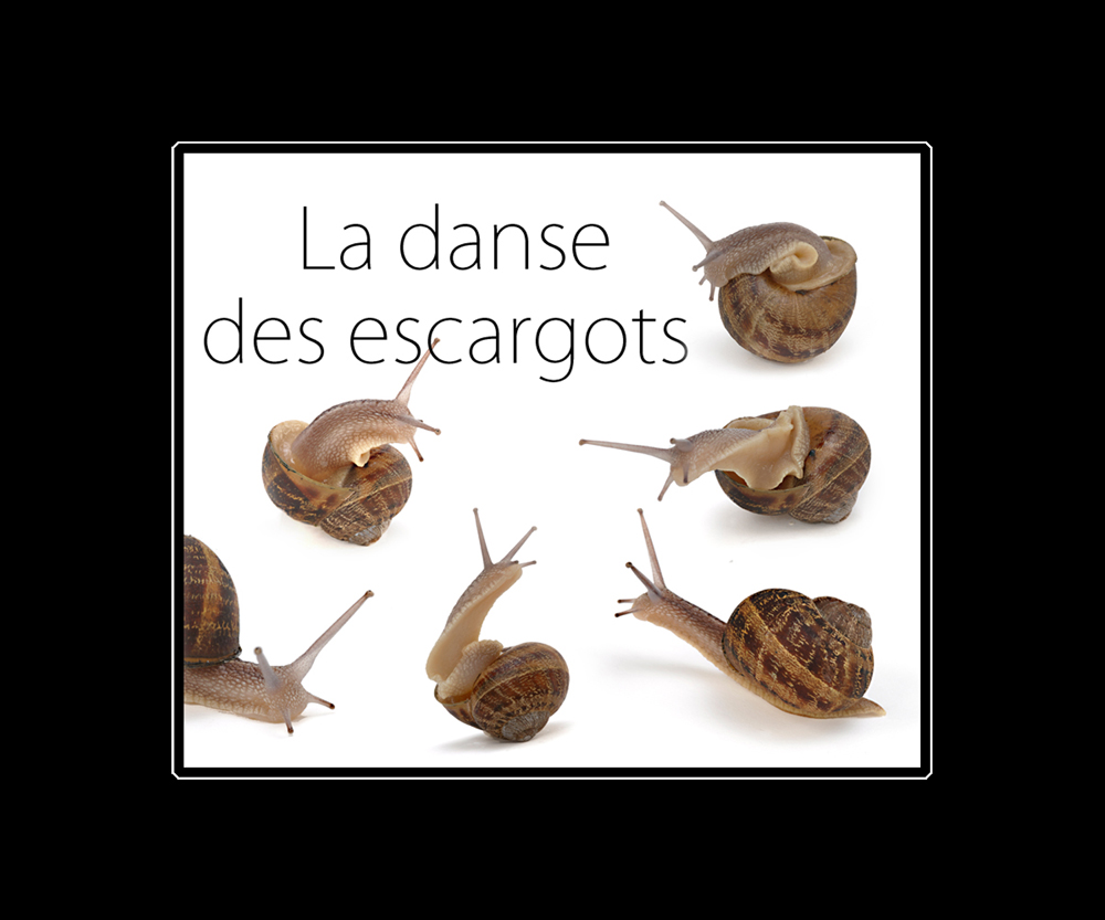 La dance des escargots