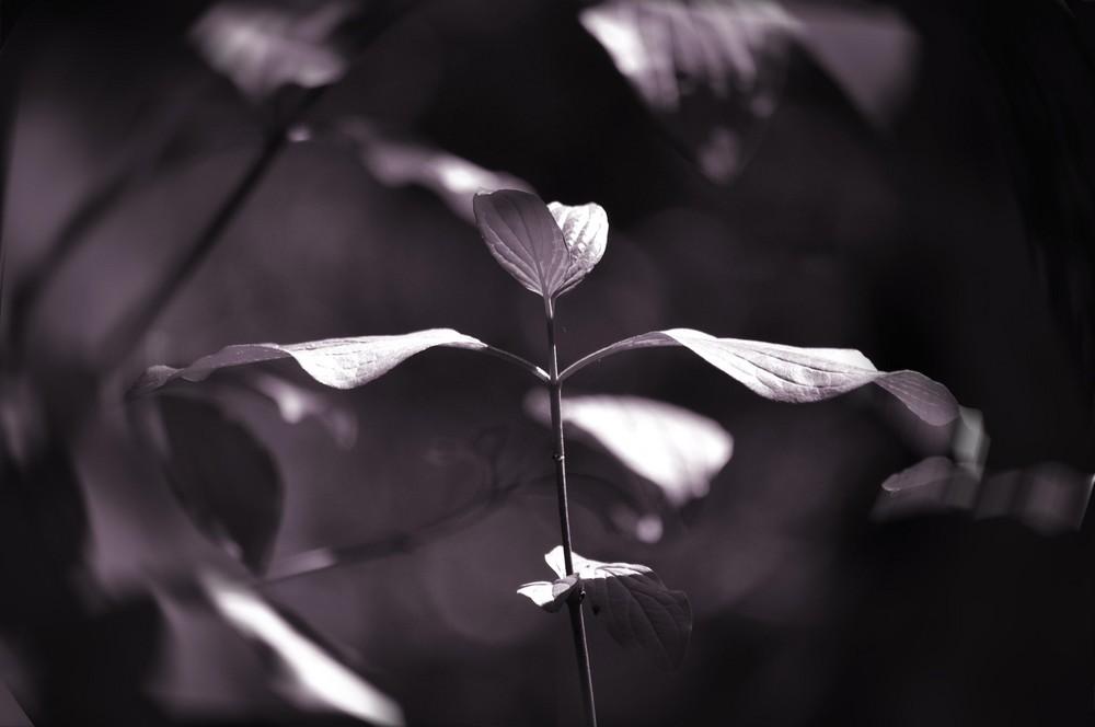 La danse des feuilles...