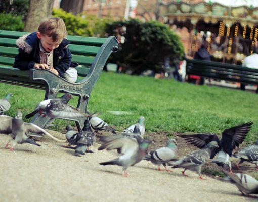 La danse des pigeons