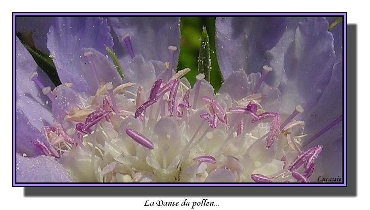 La danse du pollen
