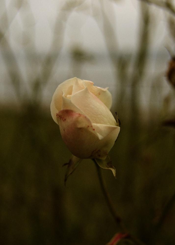 La dernière fleur de l'année