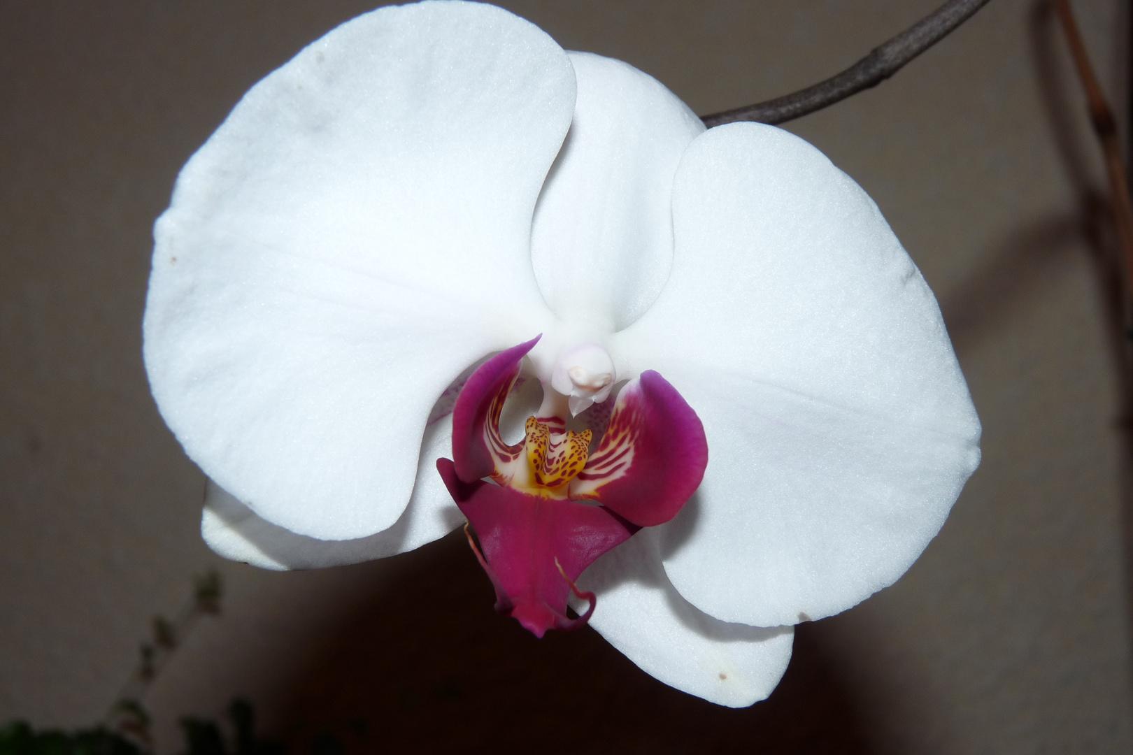 La dernière fleur pour vous .