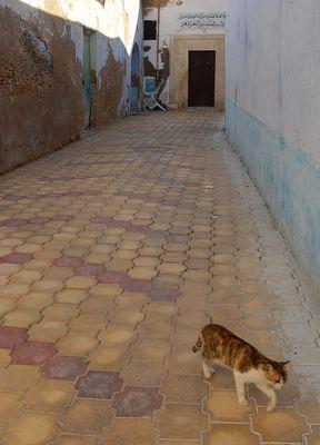 La diagonale du chat  (ou série Chacun cherche son chat n°1)