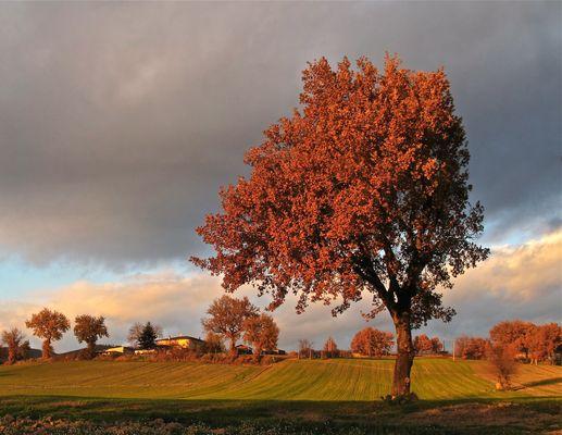La dolcezza dell'autunno