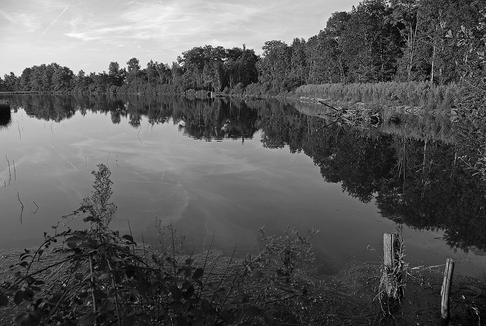 la Dombes le grand marais 03