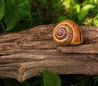 La espiral del Caracol .