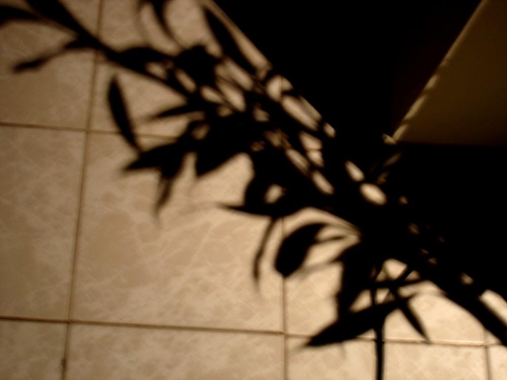 La esquina y las sombras