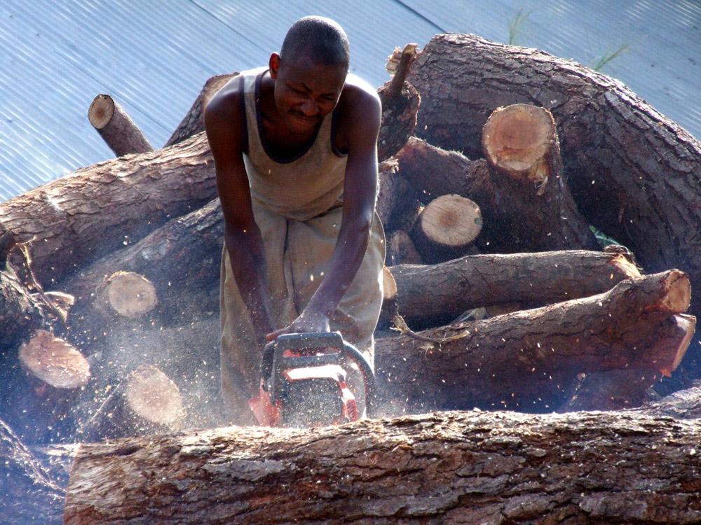 La fabbrica del legno