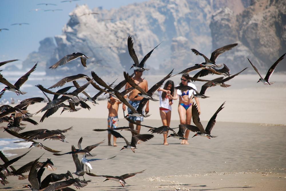La familia y las aves