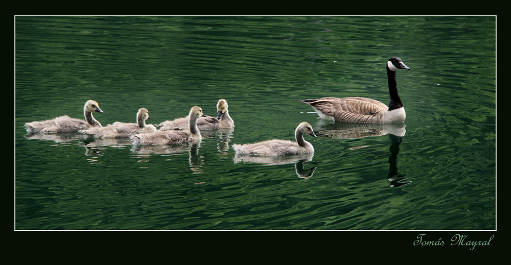 La Family