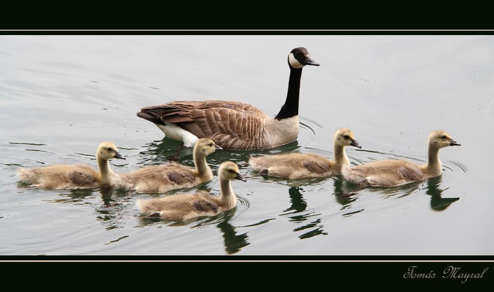 La Family-II