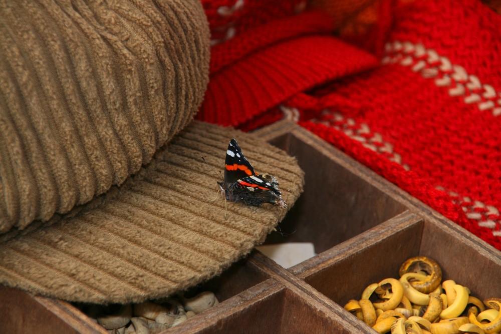 la farfalla sul cappello