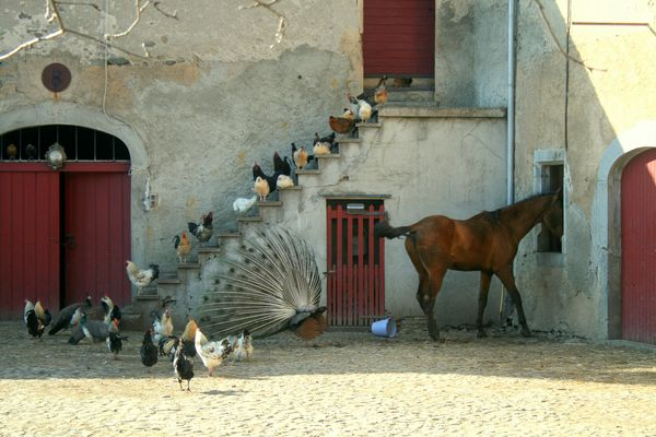 La Ferme - Der Bauernhof