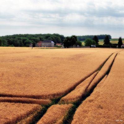 La ferme d'Hurtebise, Chemin des dames