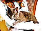 La fillette et le chat...