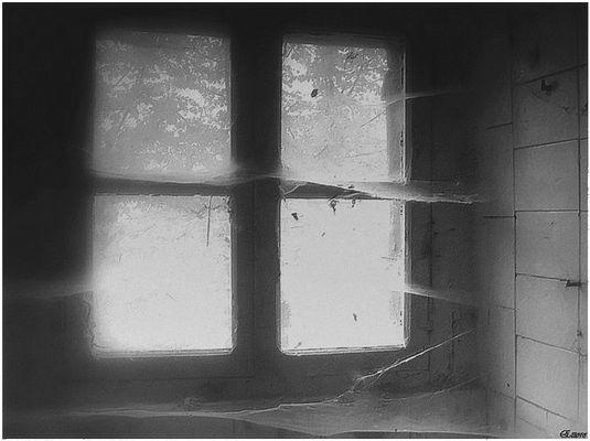 La finestra sul bosco