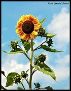 La fleur de le soleil