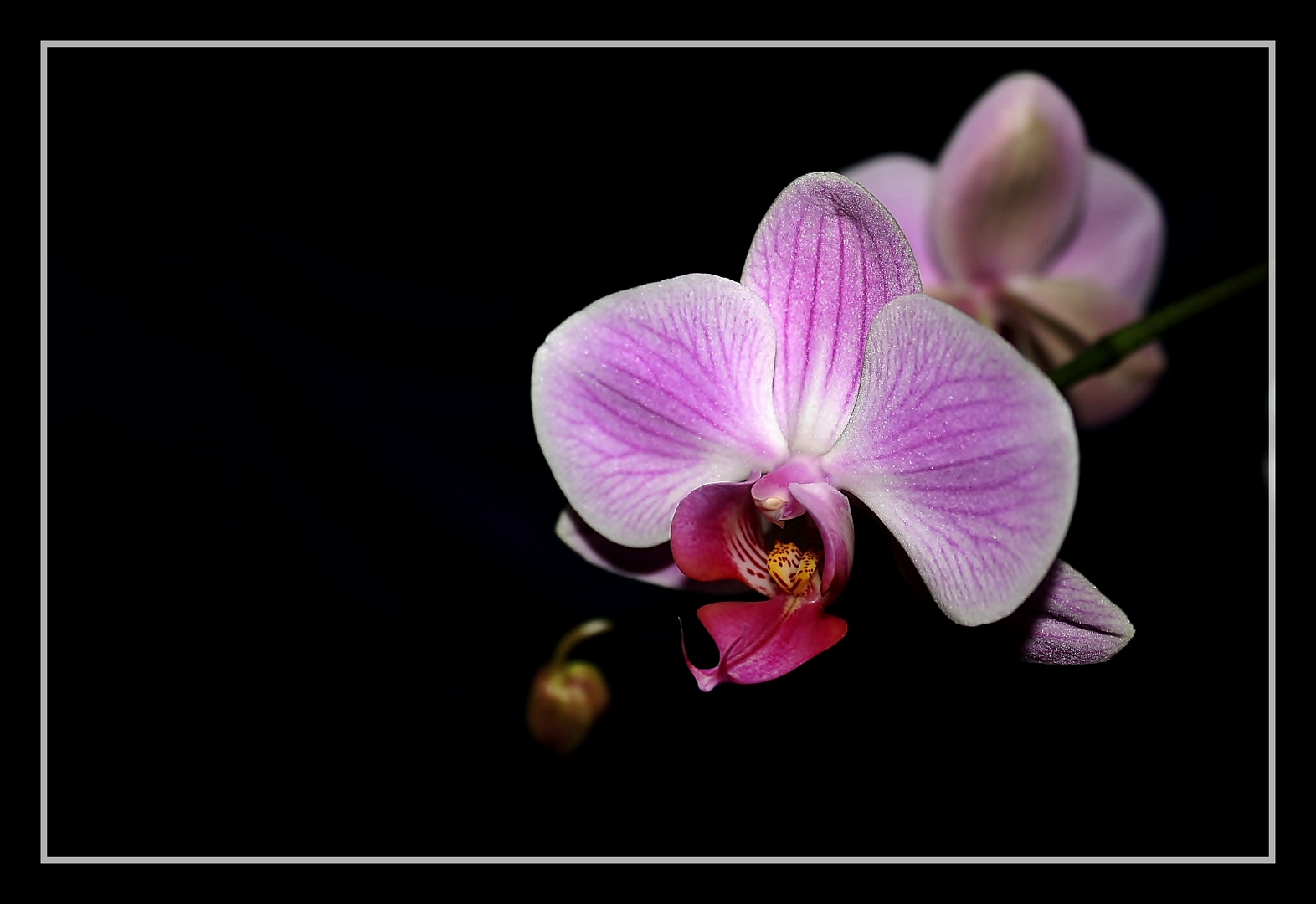 la fleur divina