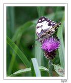 la fleur et le papillon