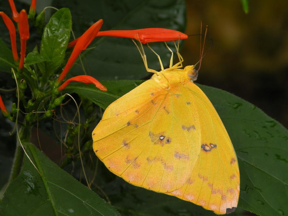 """""""La fleur et le papillon"""""""