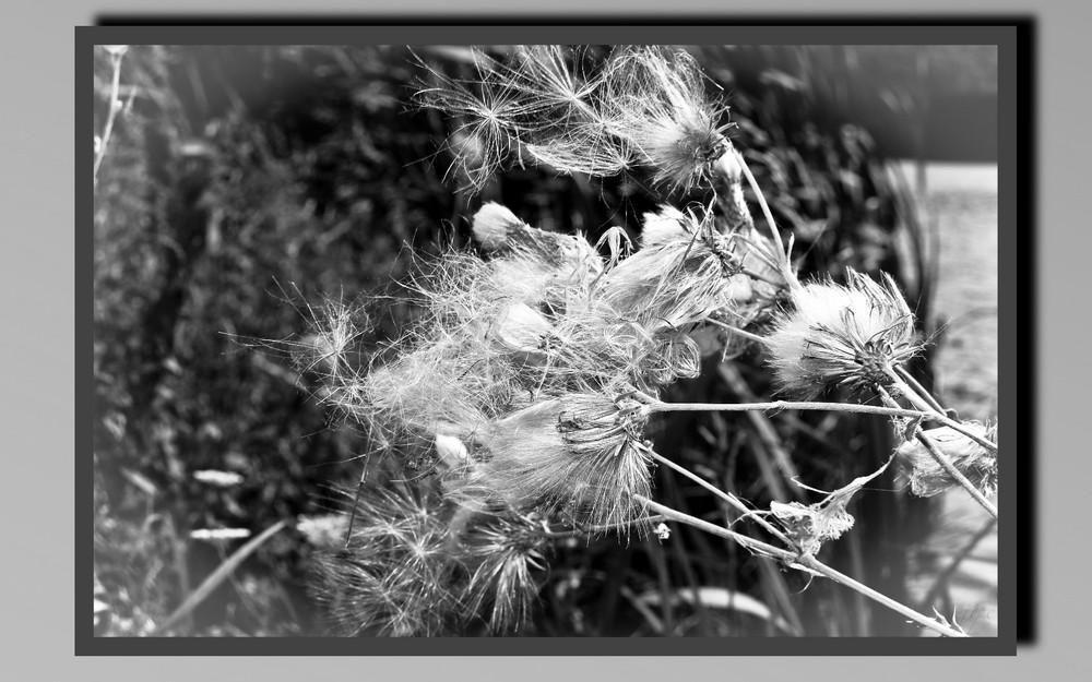 la fleur et le vent
