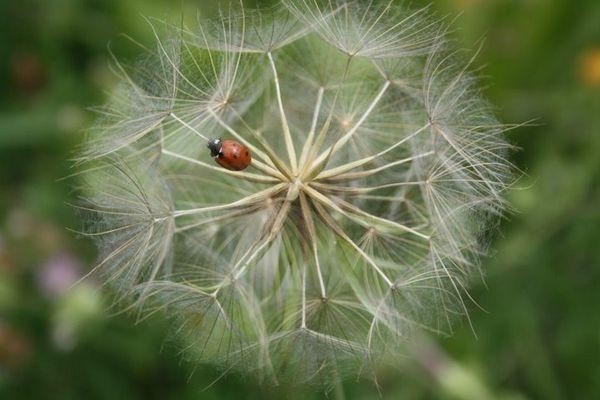 la fleur et l'insecte