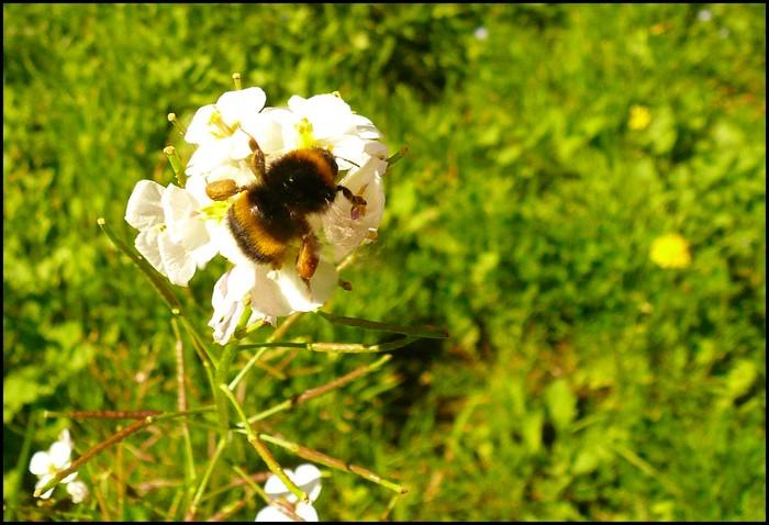La fleur et son insecte