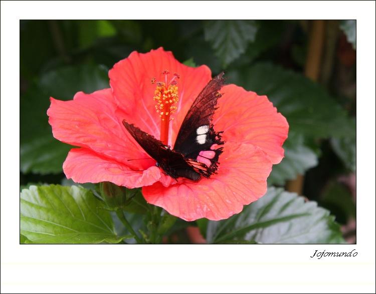la fleur et son papillon
