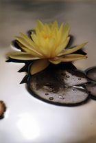 La fleur flottante