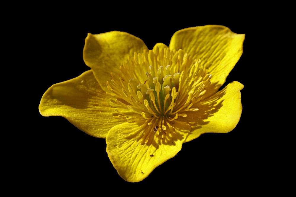 la fleur jaune !!!