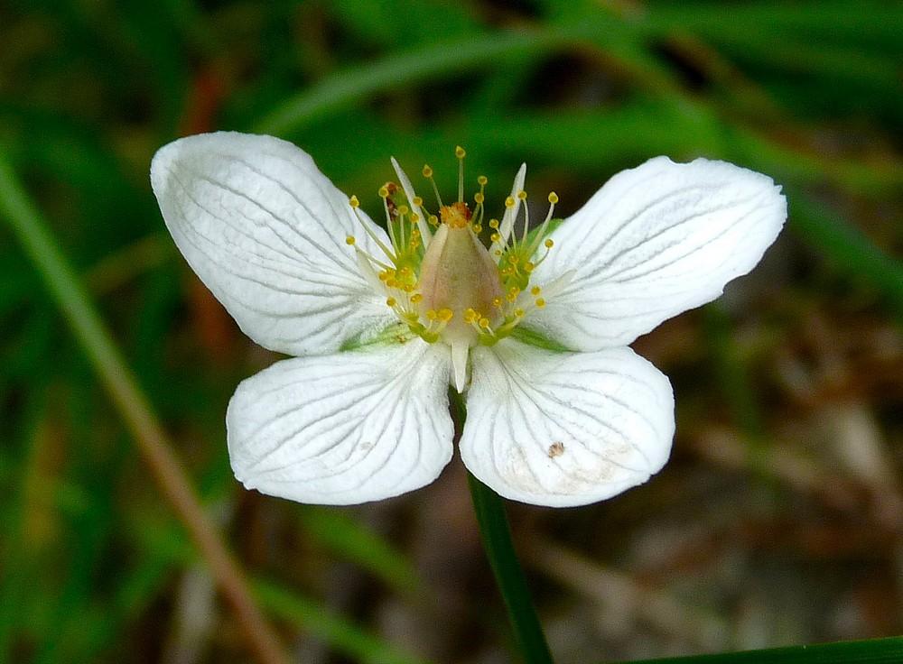 La fleur qui se prend pour un papillon