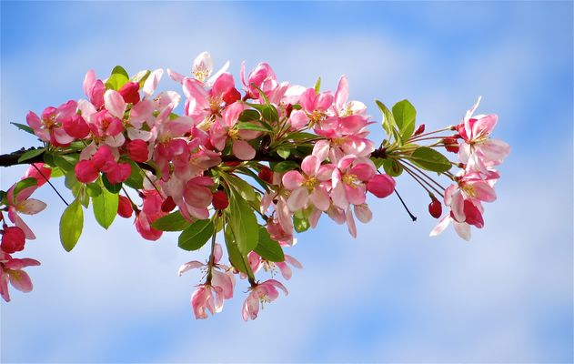 ... la fleuraison !!!...