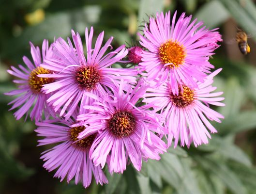 la fleure