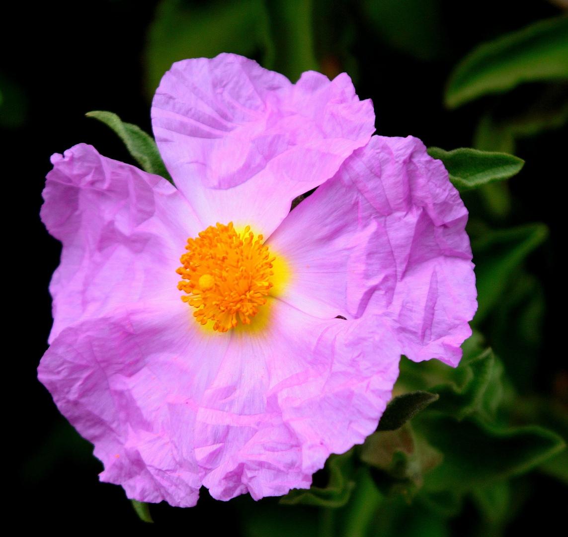 la fleurette de chiffon