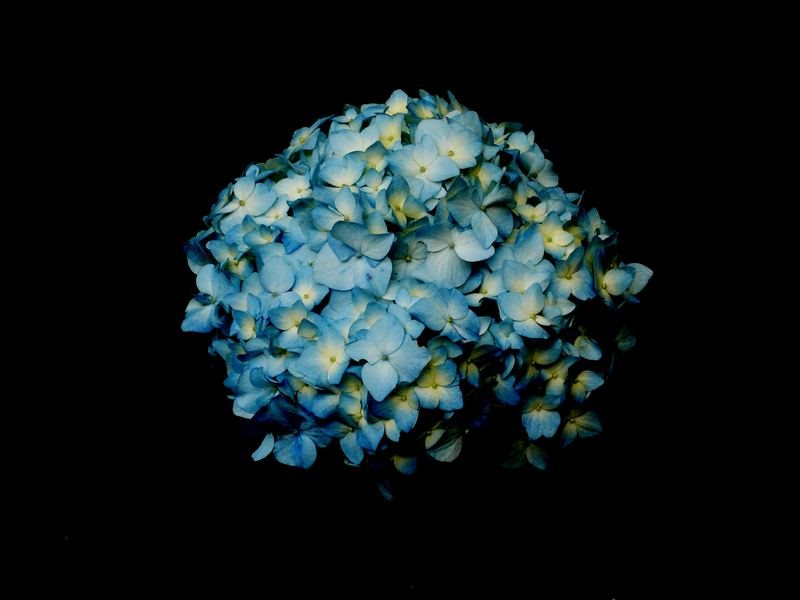 la Flor azul