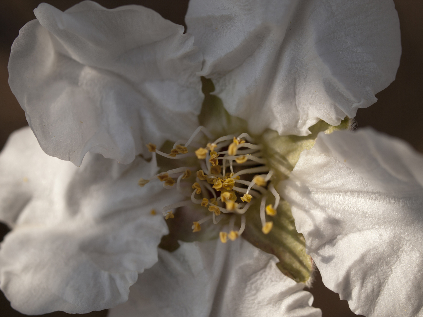 la flor de almendro