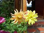 La flor de bocono